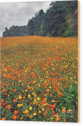 Wood Print featuring the photograph Fall Flowers by Janice Spivey