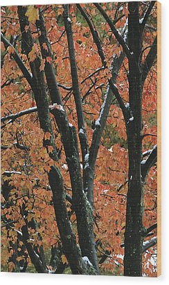 Fall Foliage Of Maple Trees After An Wood Print by Tim Laman
