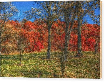 Fall Foliage Wood Print by Ronald T Williams