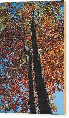 Fall From Above Wood Print by David Patterson