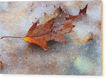 Fall Frost Wood Print by Patrice Zinck