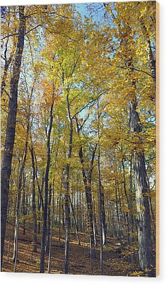 Fall In The Forest 2 Wood Print by Marty Koch