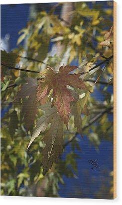 Fall Wood Print by Kelly Rader