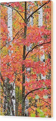 Fall Layers II Wood Print by Adam Pender