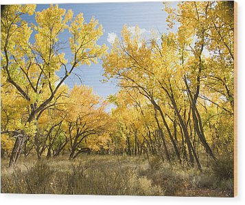 Fall Leaves In New Mexico Wood Print