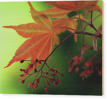 Wood Print featuring the photograph Fall Leaves by Michelle Joseph-Long