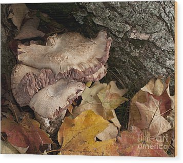 Fall Mushrooms Wood Print by Wilma  Birdwell