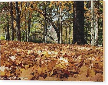 Wood Print featuring the photograph Fall On The Ground by Rachel Cohen