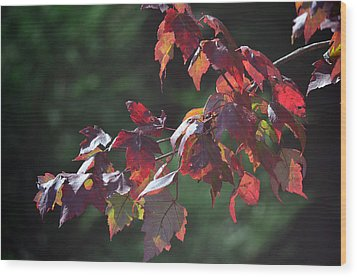 Fall Red Wood Print by Sandi OReilly