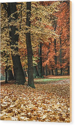 Fall Scenery Wood Print by Hannes Cmarits