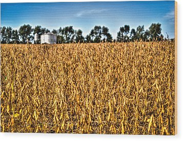 Fall Soy Field Wood Print by Dan Crosby