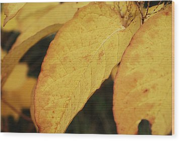 Fall Sunshine Wood Print by Terrie Taylor