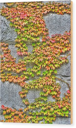 Wood Print featuring the photograph Fall Wall by Michael Frank Jr
