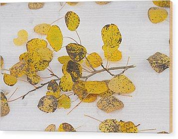 Fallen Autumn Aspen Leaves Wood Print by James BO  Insogna
