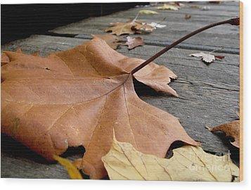 Fallen Leaf Wood Print by Jack Schultz