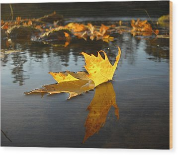 Fallen Maple Leaf Reflection Wood Print