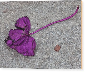 Fallen Purple Leaf Wood Print by Robert Ullmann