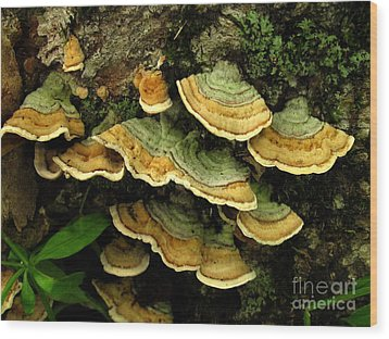 False Turkeytail Wood Print