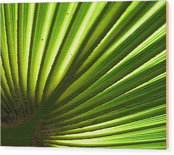 Wood Print featuring the photograph Fan Frond by Ginny Schmidt