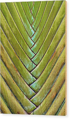 Wood Print featuring the photograph Fan Lines by Britt Runyon