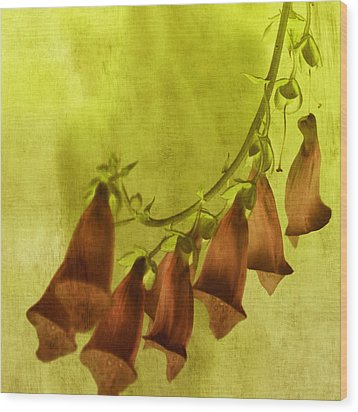 Fancy Foxglove Wood Print by Bonnie Bruno