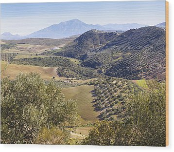 Farmland Near Casabermeja, Spain. Wood Print by Ken Welsh