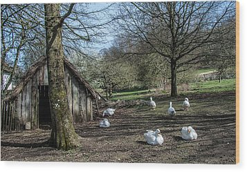 Farmyard Geese Wood Print by Dawn OConnor