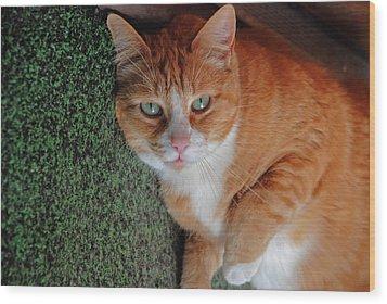 Fat Cats Of Ballard 6 Wood Print