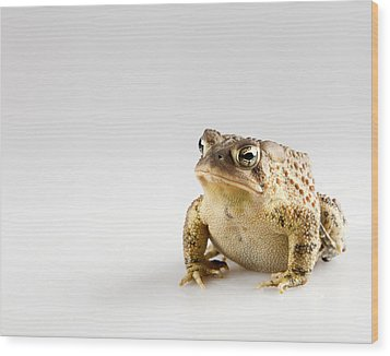 Fat Toad Wood Print