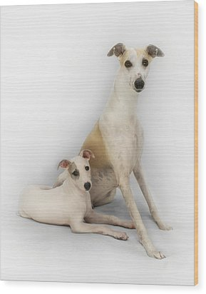 Father And Son Whippets Wood Print by John Clum