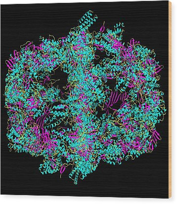 Fatty Acid Synthase In Complex With Nadp+ Wood Print by Laguna Design