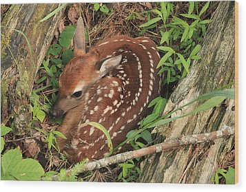 Wood Print featuring the photograph Fawn by Doug McPherson