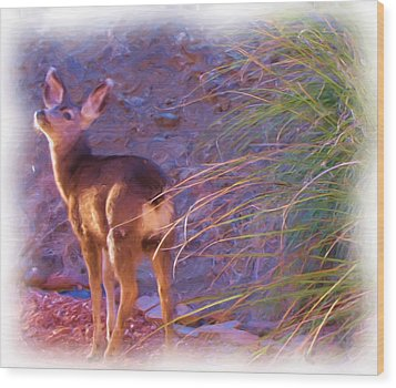 Fawn In Last Light Wood Print by FeVa  Fotos