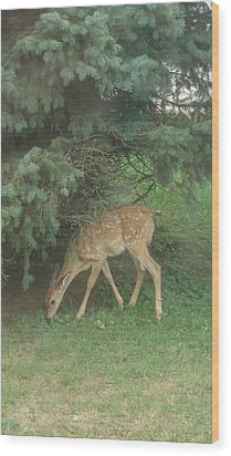 Fawn Wood Print by Leslie Manley