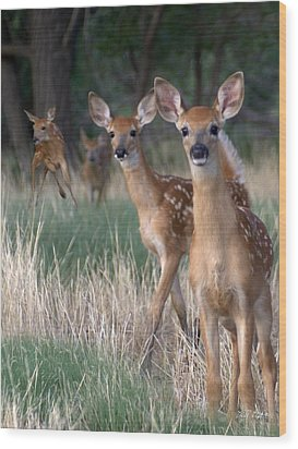 Fawns Fawns Wood Print by Bill Stephens