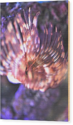 Wood Print featuring the photograph Feather Duster  by Puzzles Shum