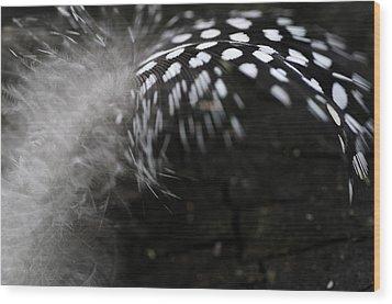 Feather Swirl Wood Print by Wanda Brandon