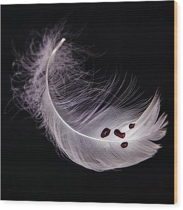 Feather With Blood Wood Print by Joana Kruse