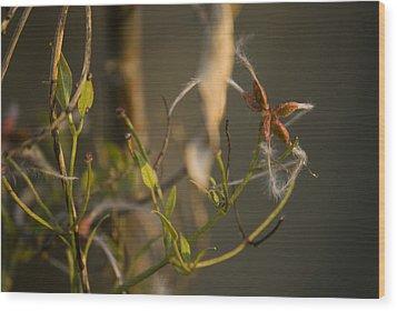 Feathery Seed  Wood Print