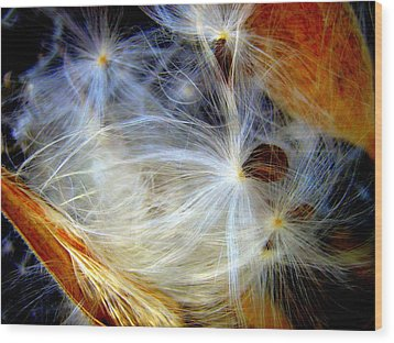 Feathery Spider Wood Print by Bruce Carpenter