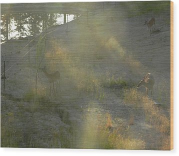 Wood Print featuring the photograph Feeding In Light Of Early Morning by Debbi Saccomanno Chan