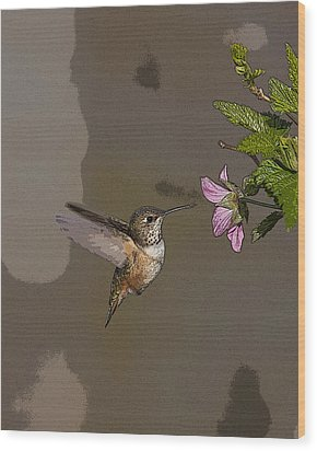 Feeding Rufus Hummingbird- Abstract Wood Print by Tim Grams