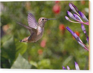 Female Allen's Hummingbird Wood Print by Mike Herdering