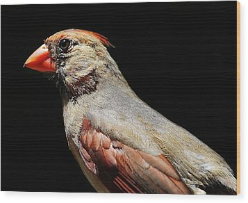 Female Cardinal Wood Print by Paulette Thomas