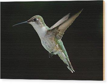 Female Hummingbird Wood Print by DansPhotoArt on flickr