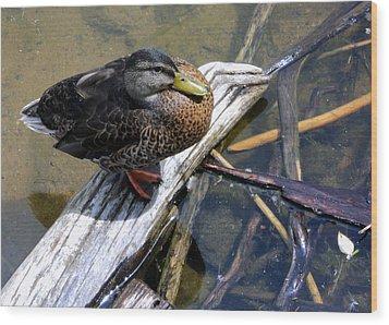 Wood Print featuring the photograph Female Mallard by Paula Tohline Calhoun