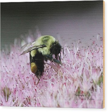 Female Worker Bumble Bee With Pollen Sack On Hen And Chick Plant Wood Print by Suzanne  McClain