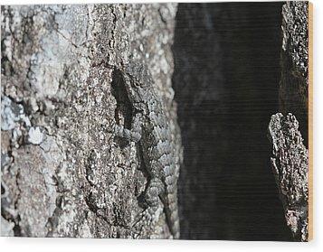 Fence Lizard Wood Print by Sean Green