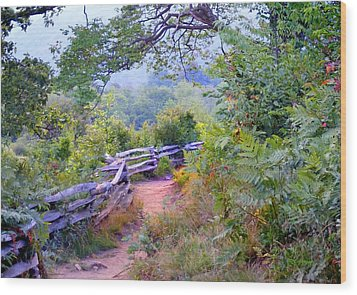 Fence To The Blueberries Filtered Wood Print