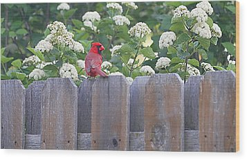Wood Print featuring the photograph Fence Top by Elizabeth Winter
